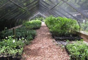 Our Plants Are Nursery Grown From Seeds And Cuttings Without The Use Of Chemical Fertilizers Or Pesticides Native Provide Many Colors